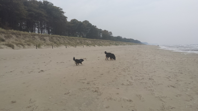 20151015 121325 - Urlaub mit Hund