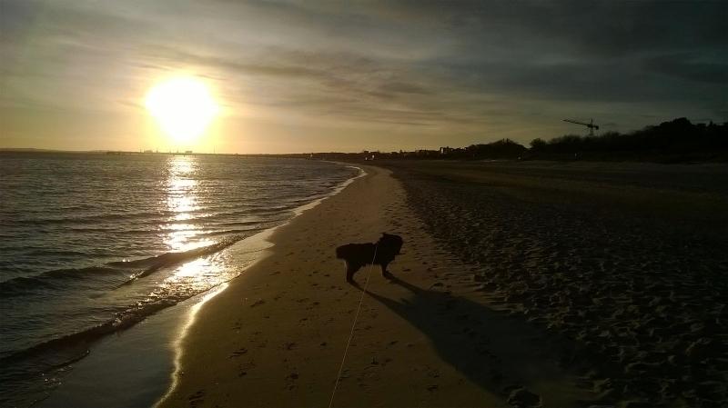 IMG 20160208 WA0003 - Urlaub mit Hund