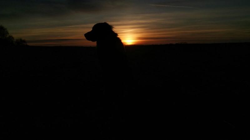 IMG 20160326 WA0006 - Urlaub mit Hund