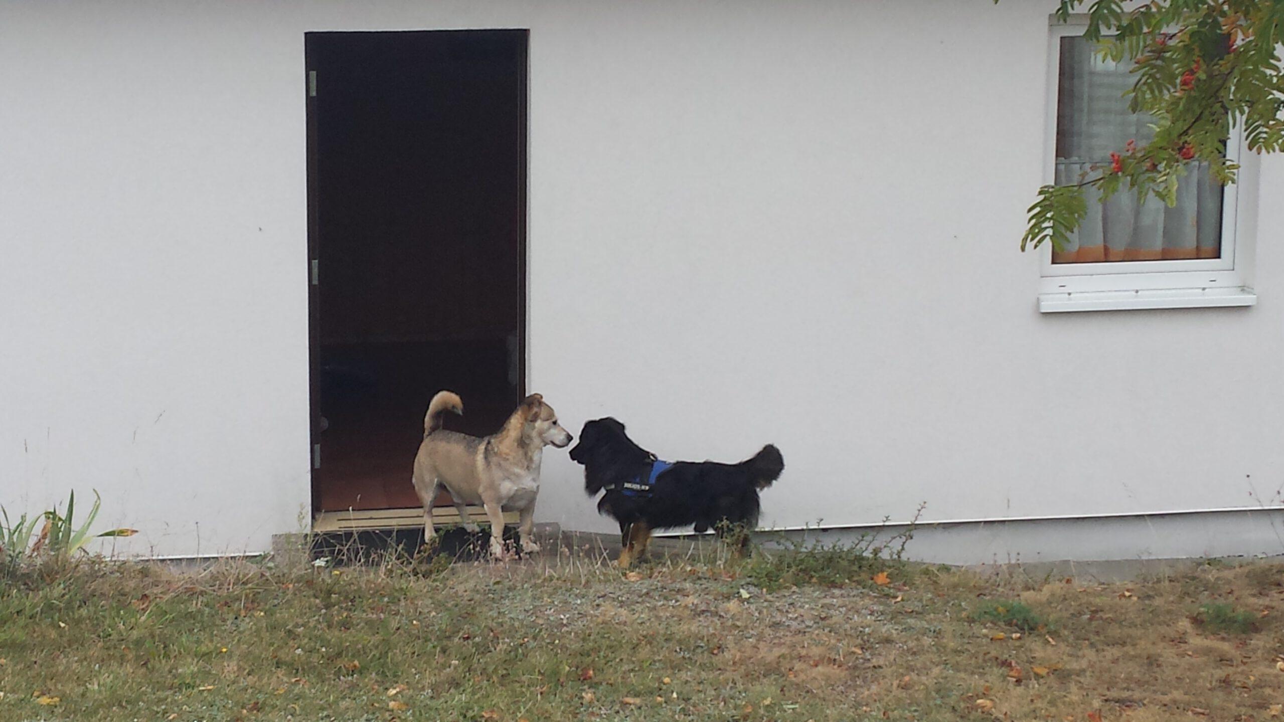 Hunde sind herzlich willkommen. Bitte sprecht mit uns vor Eurer Buchung.